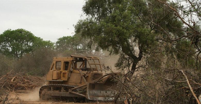 Deforestación en el Chaco.