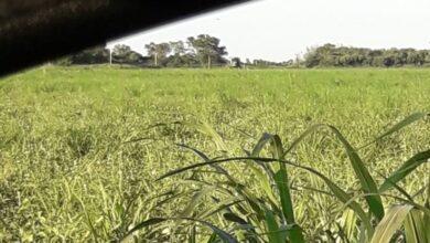 Photo of Agrotóxicos,otra vez: fumigaronen la zona rural de Campo Largo