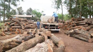 Photo of Preocupación por la situación del sector maderero