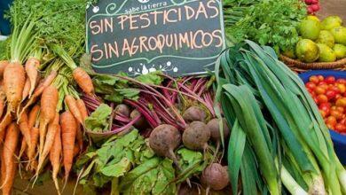 """Photo of Informe Greenpeace: """"Se debe terminar con el rocío de agrotóxicos en frutas y verduras"""""""