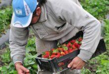 Photo of Bajó un 5% la brecha de precios entre el consumidor y productor agropecuario